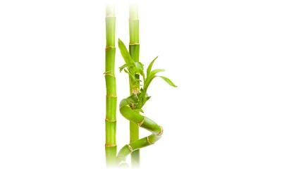 bamboo pith